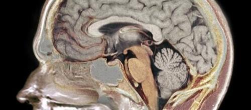 Dicas da neurociência para melhorar a concentração