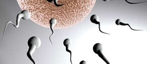 Exercícios físicos podem aumentar contagem e qualidade do espermatozoide