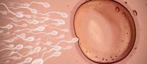 Estudo revela que são os óvulos quem escolhem o espermatozóide que os fertilizará, e não o contrário!