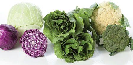 Repolho, couve e brócolis previnem o câncer de intestino